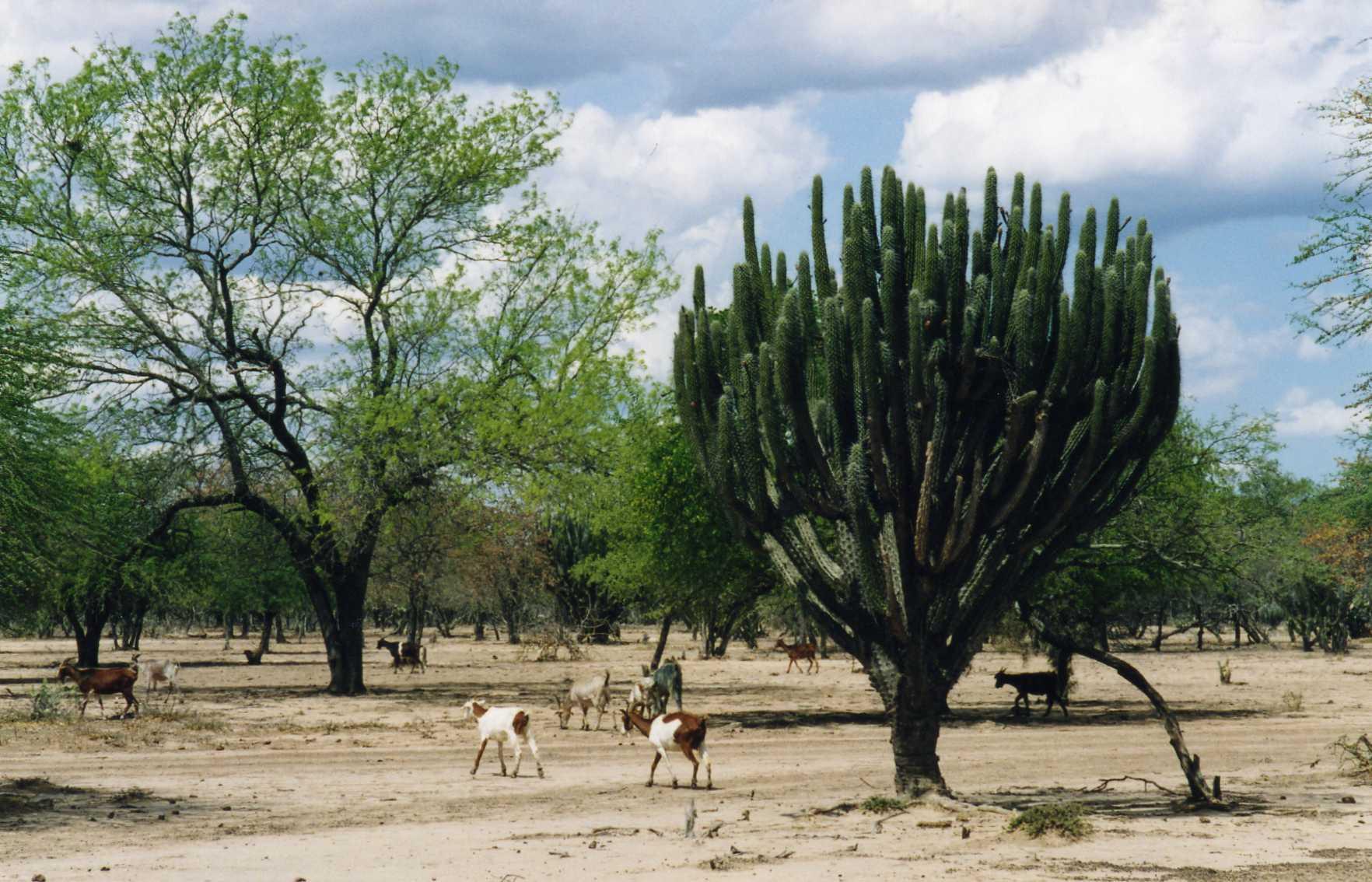 El Chaco Americano 20