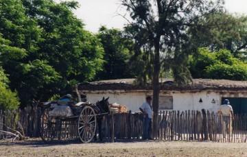 El Chaco Americano 85