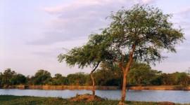 Manejo De Agua Y Bosque 1